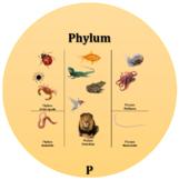 Biological Taxonomy Flip Cards & Handout