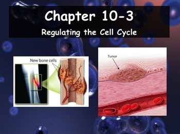 Biology - 10.3 Regulating the Cell Cycle Powerpoint and Guided Notes
