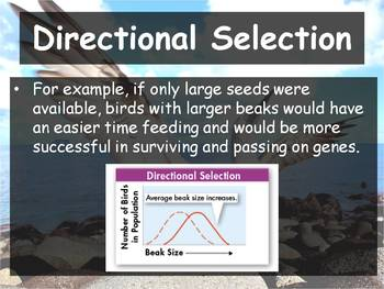 Biology - (17.2 Evolution as Genetic Change in Populations PPT & Guided Notes)