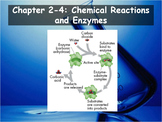 Biology - (2.4: Chemical Reactions and Enzymes PPT and Guided Notes)