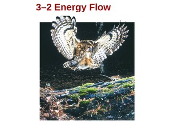Biology 3.2 Energy Flow Fill-In-The-Blank Notes