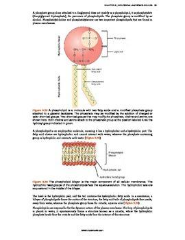 Biology - 3 - Biological Macromolecules