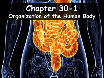 Biology - 30.1 (Part 1) Organization of the Human Body PPT and Guided Notes