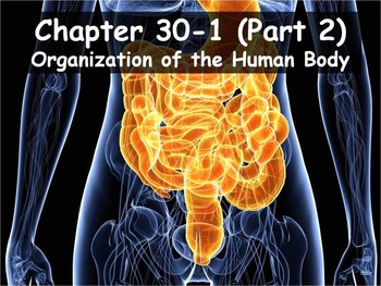 Biology - 30.1 (Part 2) Organization of the Human Body PPT and Guided Notes