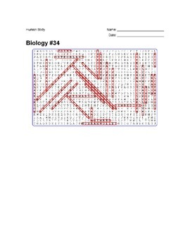 Biology #34 - Human Body - Wordsearch Puzzle