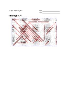Biology #36 - Human Nervous System - Wordsearch Puzzle