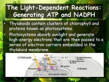 Biology - Photosynthesis (8.3 Process of Photosynthesis Pt 1 PPT & Guided Notes)