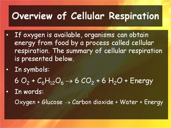 Biology - 9.1 - Cell Respiration: An Overview Powerpoint and Guided Notes)