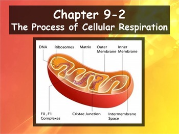 Biology - 9.2 The Process of Cellular Respiration Powerpoint and Guided Notes