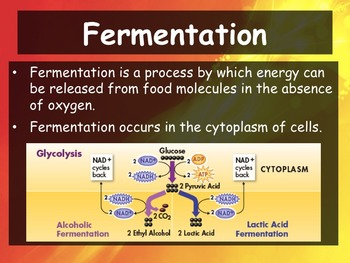 Biology - 9.3 Fermentation Powerpoint and Guided Notes