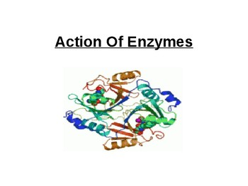 Biology - Action Of Enzymes.