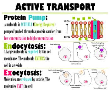 Biology Active Transport Poster