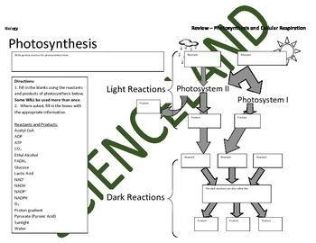 Biology Activity: Cell Energy Review (Photosynthesis & Cel