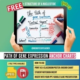 Free Biology Anchor Chart-Path of Gene Expression and Stru