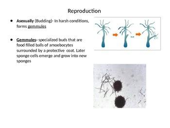 Biology: Animal Invertebrates (Visually Adapted for ELL/ESL)