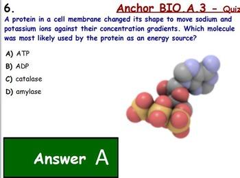 Bioenergitics - Photosynthesis and Cellular Respiration; ATP w/ worksheet