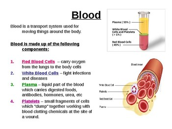 Biology - Blood, blood vessels, the heart and blood groups