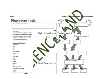 Bundle: Photosynthesis and Cellular Respiration Flow Charts