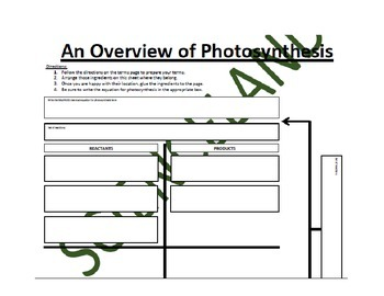 Biology Bundle: Photosynthesis and Cellular Respiration Fl