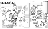 Biology - Cell Cycle & Meiosis Notes / Review Page