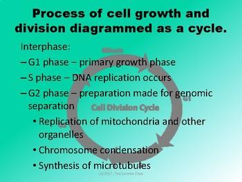 Biology Cell Cycle Mini Bundle