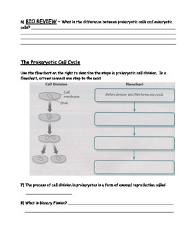 Genetics - Cell Cycle Worksheet