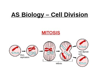 Biology - Cell Division (Mitosis)