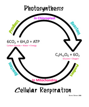 Biology Cell Energy Poster
