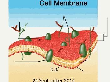Biology - Cell Membrane