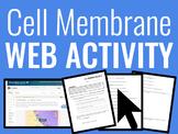 Biology: Cell Membrane Web Activity