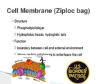 Biology: Cell Organelles