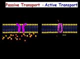Cell Transport - Unit w/ quiz; w/ worksheet
