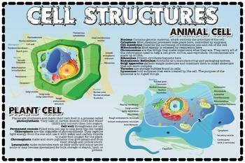 Biology: Cells and Cell Structures