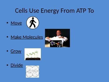 Biology: Cellular Respiration (Visually Adapted for ELL/ESL)