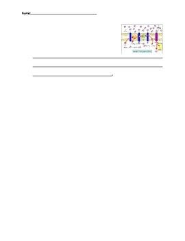 Biology: Cellular Respiration (Visually Adapted for ELL/ESL) Summative Exam