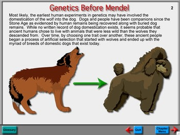 Biology Chapter 10: Genetics