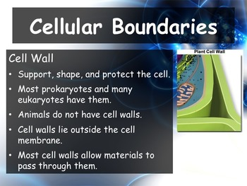 Biology - Chapter 7 (7 2 Cell Structure Powerpoint and Guided Notes)