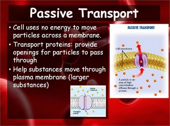Biology - Chapter 7 (7.3 Cell Transport Powerpoint and Guided Notes)