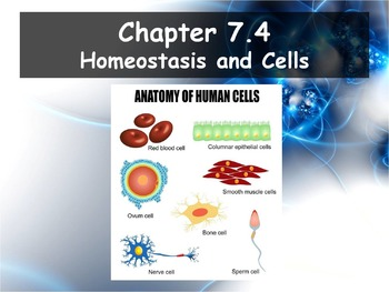 Biology - Chapter 7 (7.4 Homeostasis and Cells Powerpoint and Guided Notes)