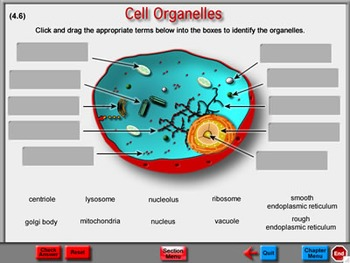 Biology Chapter 7: The Cell