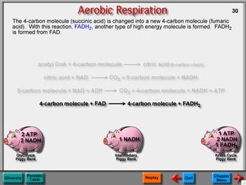 Biology Chapter 8: Cellular Biology