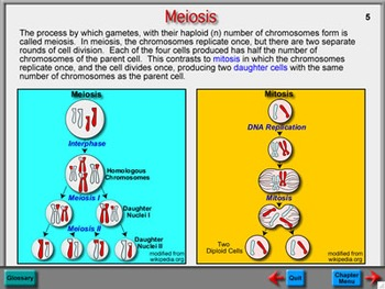 Biology Chapter 9: Cell Reproduction