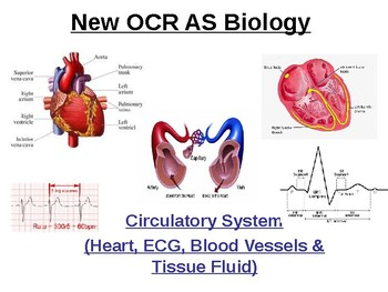 Cardiac cycle teaching resources teachers pay teachers biology circulatory system fandeluxe Choice Image