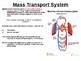 Biology - Circulatory System.