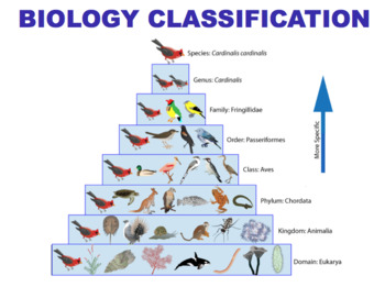 Biology Classification - Kingdoms, Cladistics & Dichotomous Keys (Editable)