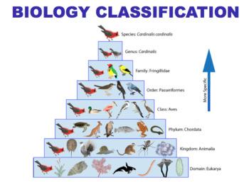 100+ [ Cladistics Worksheet ] | Phylogeny And Cladistics ...