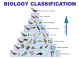 Biology Classification - Kingdoms, Cladistics & Dichotomou