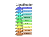 Biology Classification of Living Things