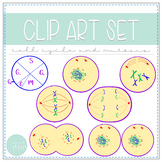 Biology Clip Art - Cell Cycle and Mitosis