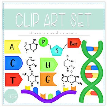 Biology Clip Art - DNA and RNA
